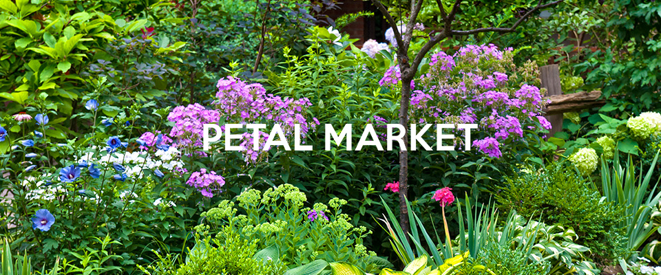 PTEAL MARKET アクセセアリー